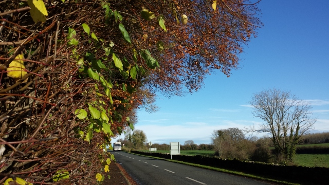 Winter hedgegrow along the road to Kilfinane